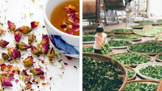 【30泊31日宿泊費無料!】シェアハウス留学しませんか? 「お茶」をコンセプトとしたシェアハウスのSNSアンバサダー大募集!